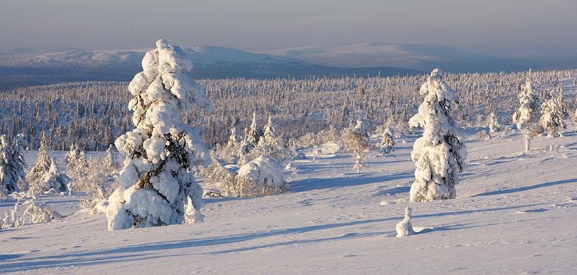 finland_lapland_saariselka-winter-scenery.jpg